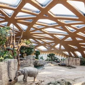 大象的新家