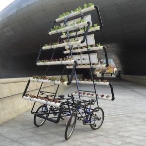 一个共享单车上的菜园